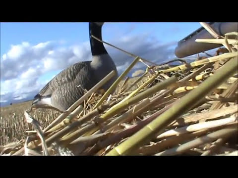 Waterfowl Hunting Recap 2013