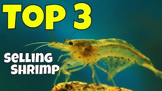 The Top Three (3) Best Selling Shrimp in Our Hobby