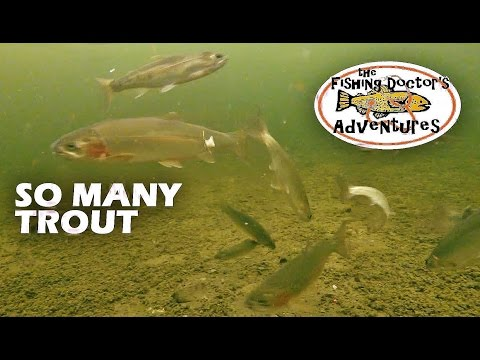 Amazing Underwater Rainbow Trout on Slender Spoon
