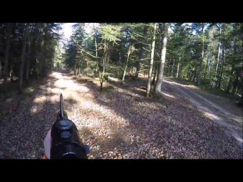 Chasse En Battue Aux Sangliers Dans Les Vosges 2015/2016 (partie 2)
