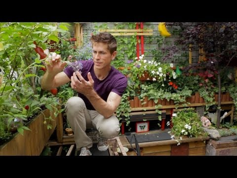 Tiny Williamsburg hipster garden - Urban Gardener video