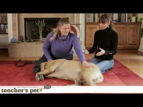Massaging Your Dog | Teacher s Pet With Victoria Stilwell
