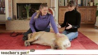 Massaging Your Dog   Teacher's Pet With Victoria Stilwell