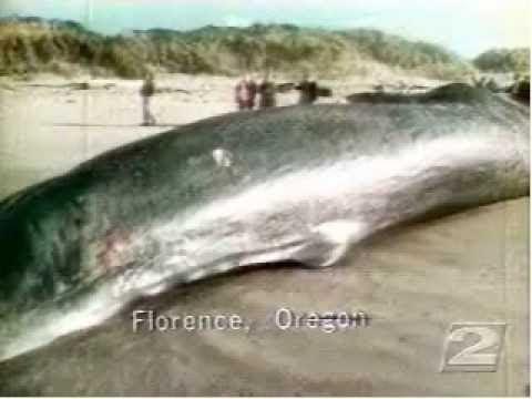 La ballena que exploto en Florence Hqdefault