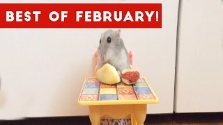 Funniest Pet Reactions & Bloopers of February 2017 | Funny Pet Videos