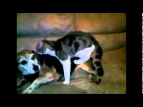 Dog Humps Cat While Eating