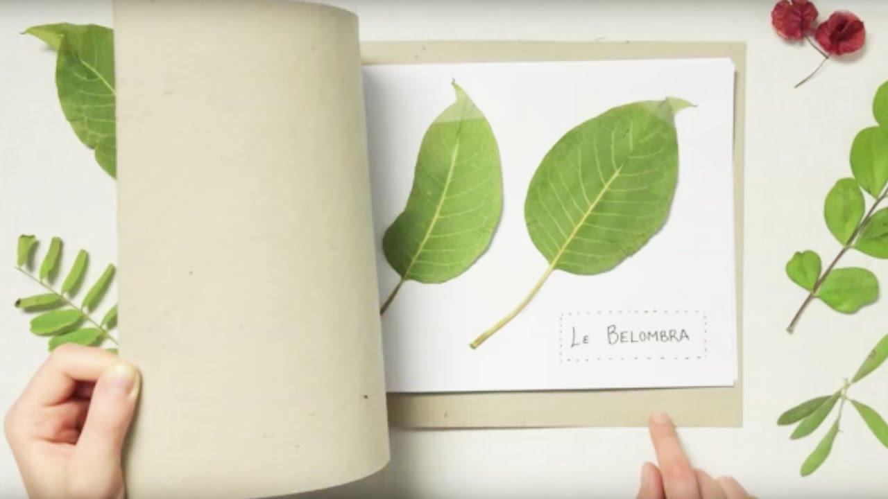 Fabriquer un herbier youtube - Faire un herbier ...