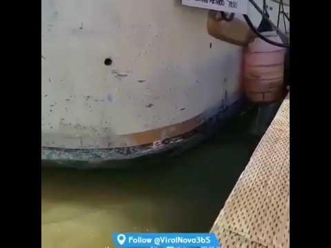 Морской кот утащил девочку