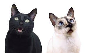 download lagu Despacito - Cat Version Luis Fonsi Despacito Ft. Daddy gratis