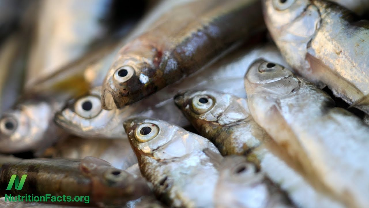 Fish Intake Associated With Brain Shrinkage