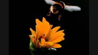Nood - Bumblebee