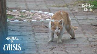 'CỨU GIÚP!' Mèo đi lạc cầu xin giúp đỡ bạn bè của mình được đối xử (Phần 2) | Động vật trong Crisis