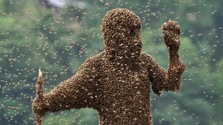 ATTACKED BY THOUSANDS OF BEE
