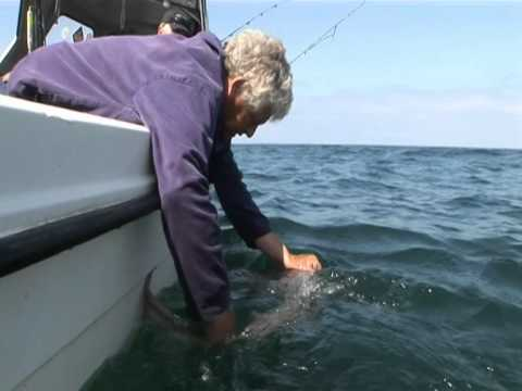 Tope Fishing Luce Bay - Charter Boat Fishing