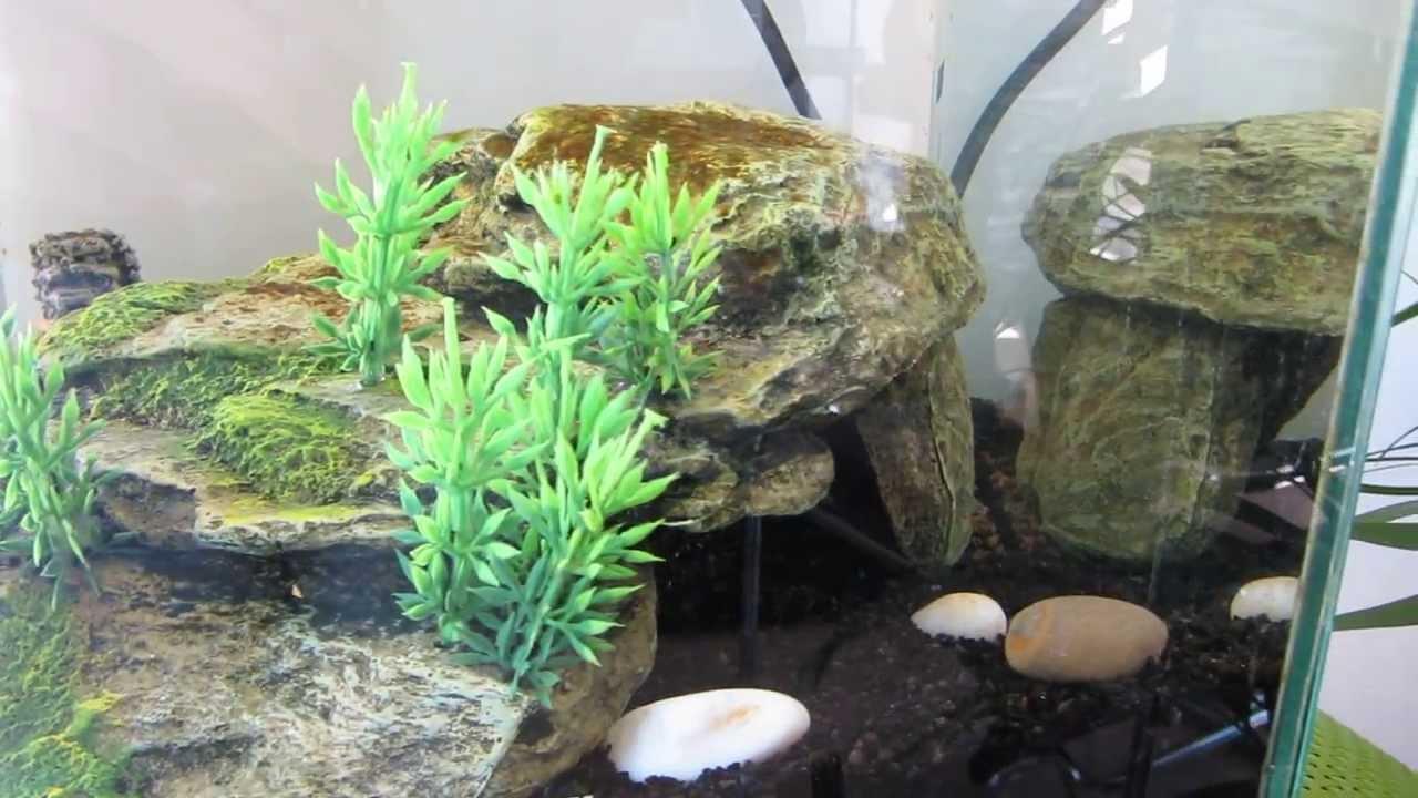 incroyable aquarium amazonien poisson