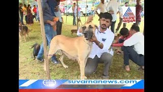Dog Show In Chikkamagaluru ! A Look At Some Of The Top Breeds