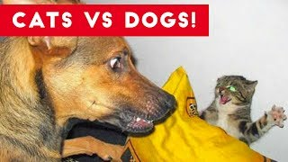 Funniest Cat Vs Dog Video Compilation of 2017 | Funny Pet Videos