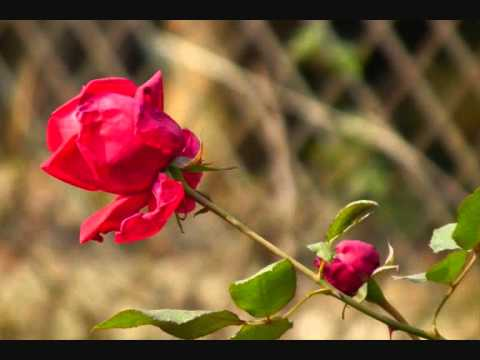 Sunte hain k mil jati hai ----jagjit singh & chitra Singh