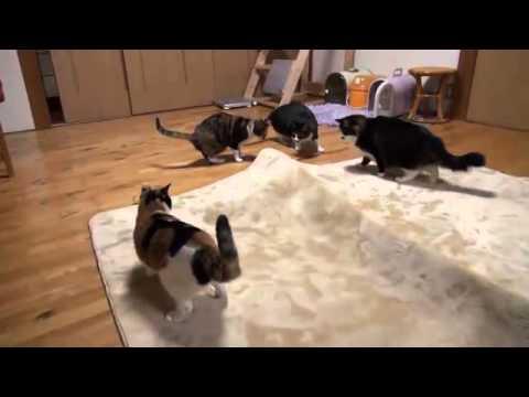 Коты играют в прятки