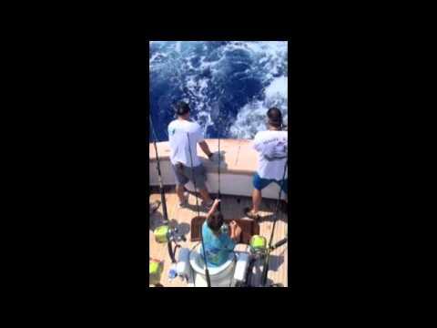 Bermuda White Marlin