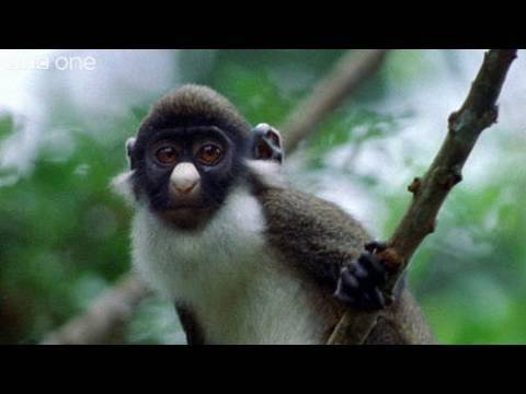 Funny Talking Animals - Walk On The Wild Side - Episode Four Preview - BBC One