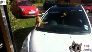 CATS Epic Funny Compilation  2013