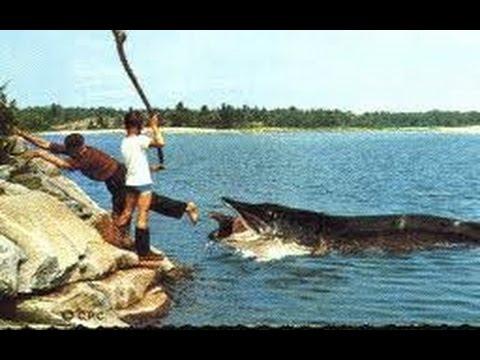 рыбалка самые крупные щуки видео