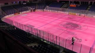 Plymouth Whalers Pink Ice