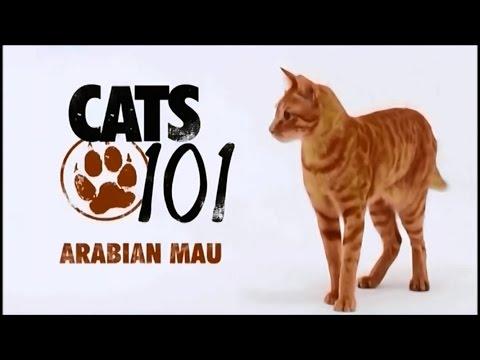 Порода кошек Арабский Мау