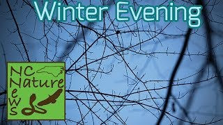Winter Evening | Exploring & Herping #14