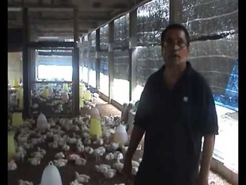 The Master of Probiotic Chicken, Mr Nathan