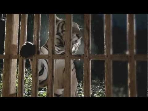 Tiger vs. 3.5 Million Toothpicks | We Protect Us | AVG
