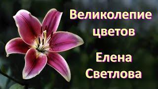 Великолепие цветов - Magnificence of Flowers - Елена Светлова