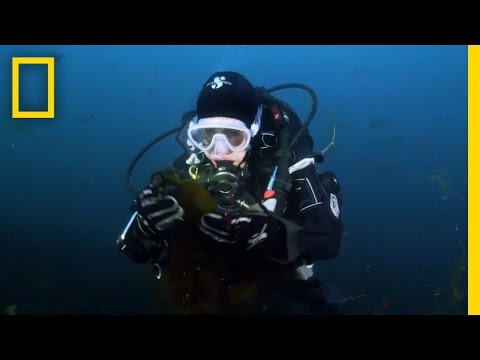 Save the Ocean, Save Ourselves | Sea of Hope: America's Underwater Treasures