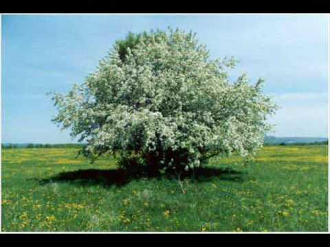 NTL - Там где не ростут цветы