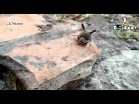 Encontraron una araña cabeza de gato en el fondo de su casa