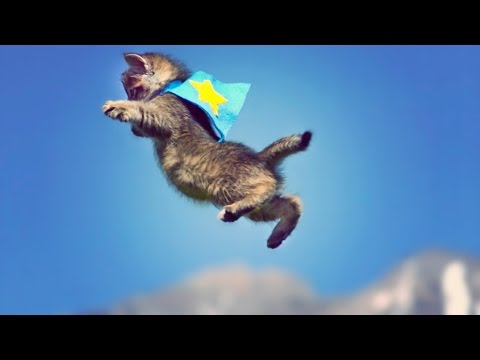 Cute Kittens Fly in Slow Motion to Hip Hop Dubstep