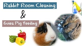 7 Rabbits & 2 Guinea Pigs | CLEANING & FEEDING | My Animal World