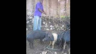 Haiti Jacmel Journals Domestic Animals Photo Report