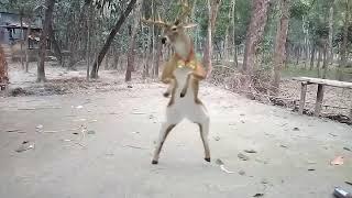 funny animals dance202020