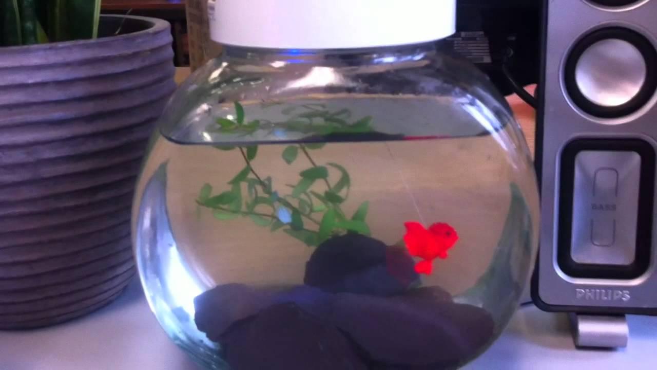 Goldfish in a bowl meet robo fish youtube for Robo fish tank