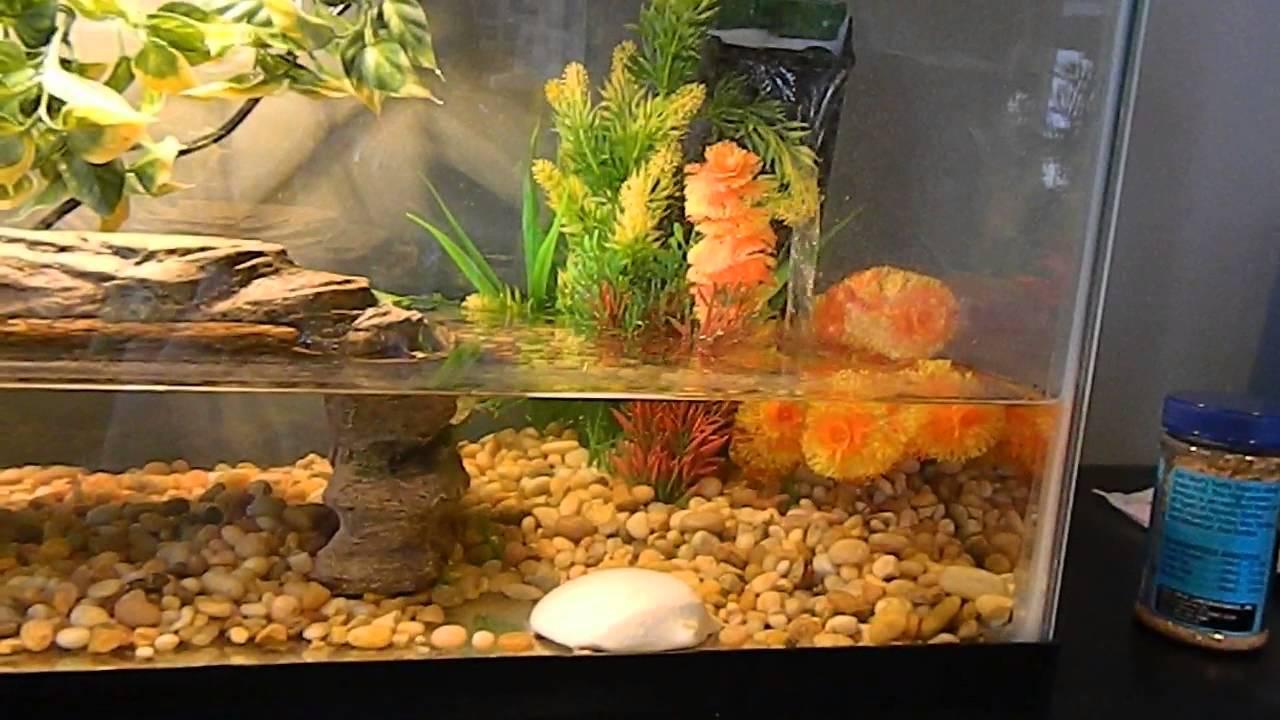 Turtle Tank 60 Gallon Reptile