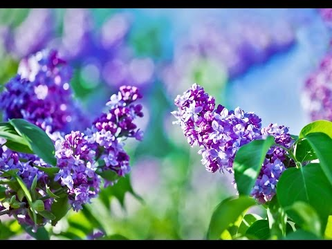 "Download Peaceful Music, Relaxing Music, Instrumental Music, ""In the Eve of Spring"" by Tim Janis"