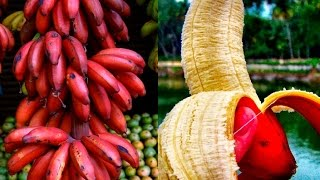 Health Benefits Of Red Bananas, They Call It The ''Special Fruit'' And This Is Why