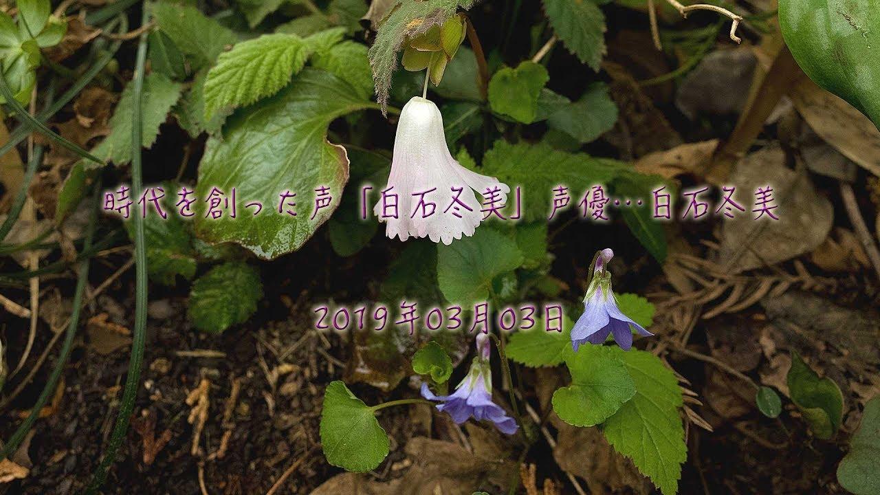 白石冬美の画像 p1_2