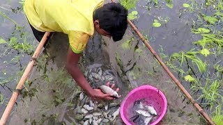 The Tremendous View Of Fishing By The Mesh Net || Village Net Fishing.