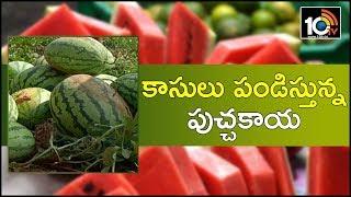 కాసులు పండిస్తున్న పుచ్చకాయ | Profitable Watermelon Cultivation Techniques | Matti Manishi