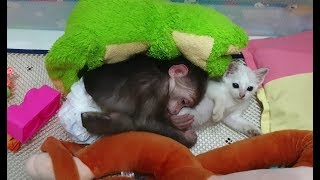 Baby Monkey | Playtime And Bedtime Of Monkey Doo And Cat Miu