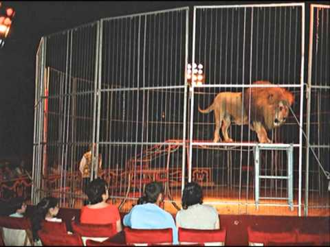 Wild Animals in Circuses to be banned in England (2015) but France...