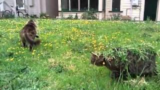 Thumb Un gato con camuflaje